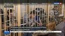 Новости на Россия 24 • Во Владивостоке началось третье рассмотрение дела приморских партизан