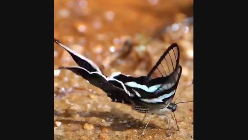 Красавицы бабочки