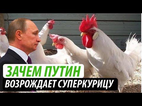Зачем Путин возрождает суперкурицу