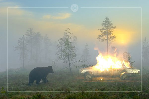 Задача из китайского экзамена по физике: Вопрос: Медведь упал в яму-ловушку глубиной 19,617 метров. Время его падения составило 2 секунды. Какого цвета был медведьА. Белый (полярный медведь)B.