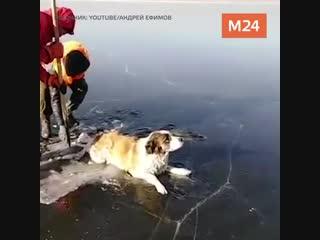 Собака попала в ледяную ловушку