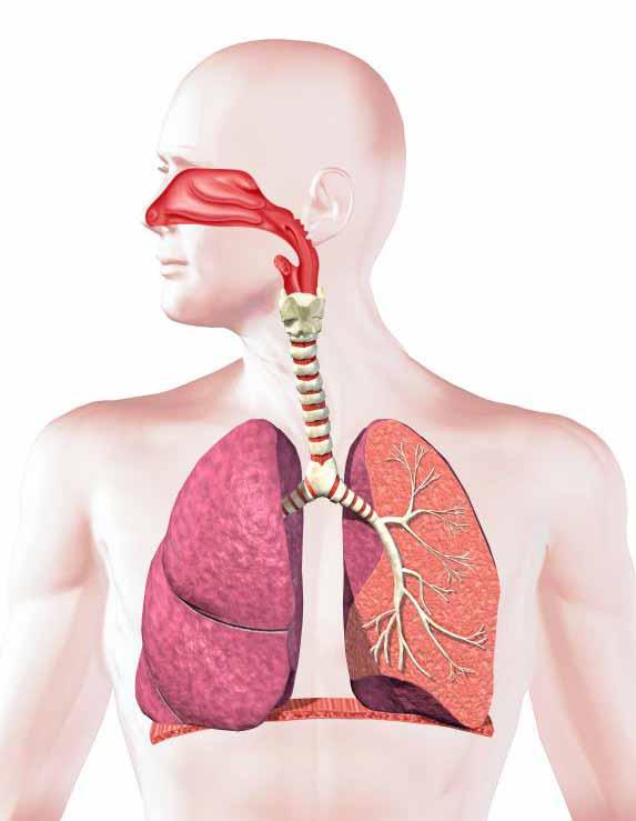 Дыхательная система человека - черная болезнь легких