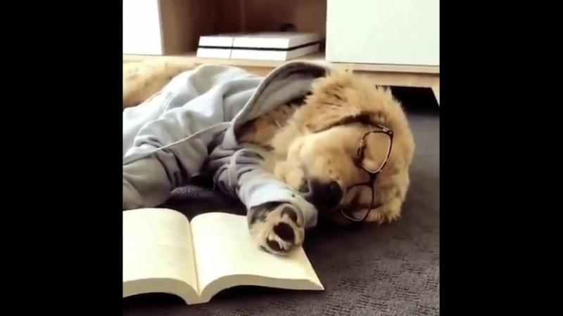 На сегодня хватит. Пора спать. Всем спокойной ночи и сладких снов. До завтра.