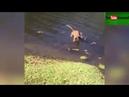 если чихнуть позади кота, который пьет воду из озера