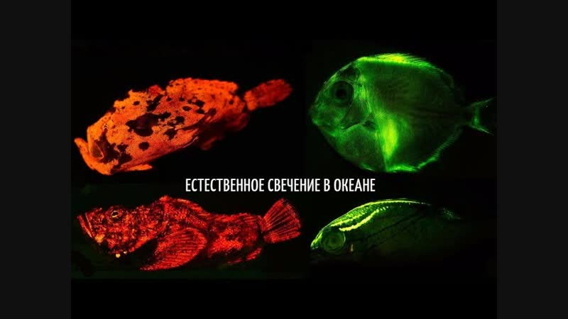 Скрытый мир биолюминесценции рыб