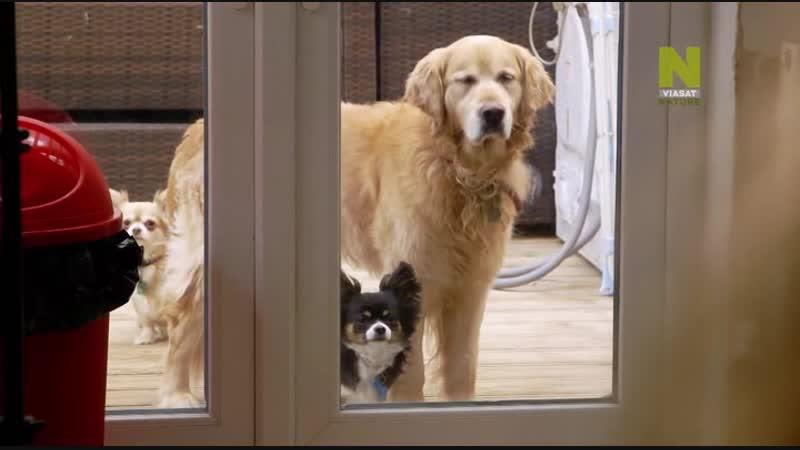 Секретная жизнь собак Dogs Their Secret Lives 2015 1