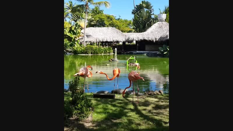 Фламинго в Natura Park Beach Eco ResotSpa