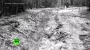 Вслед за овцами стая волков пересекла литовско-белорусскую границу
