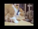 Как коты делят одну миску с едой? )