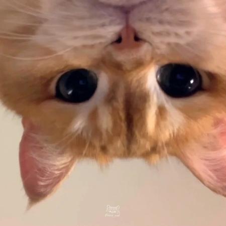 Pisco The Cat