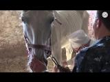 Полицию заподозрили в жестоком обращении с лошадьми