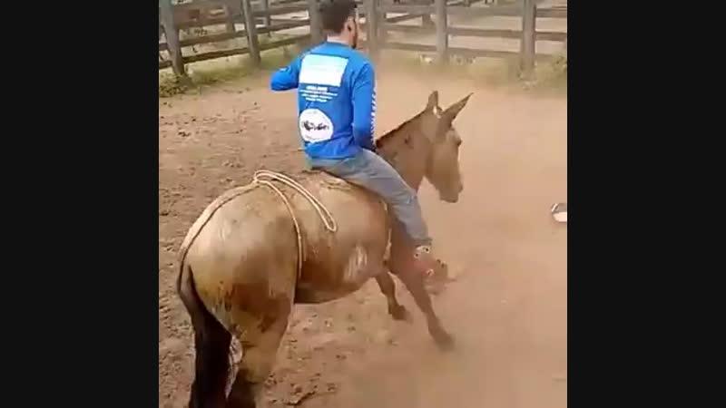 Как объездить лошадь?