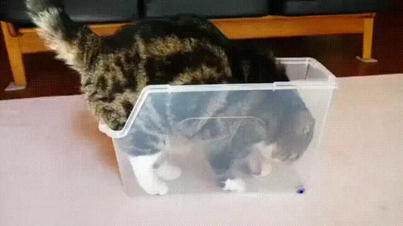 Кошки - жидкость? Проверим!