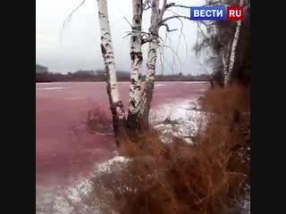 Замерзший пруд под Рязанью приобрел цвет борща