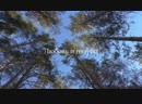 Клип «Любовь и голуби»