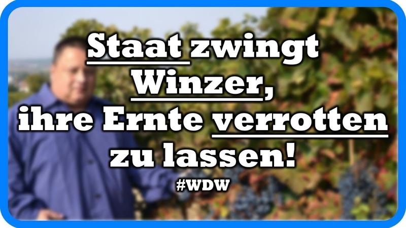 Wahnsinn! Staat zwingt Winzer, ihre Ernte verrotten zu lassen! ~WDW~