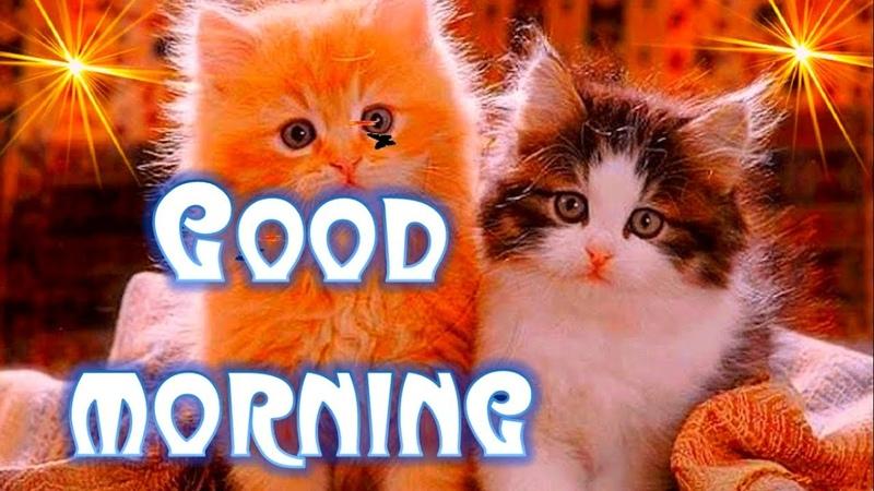 Good Morning Sweetheart! Videocard Good Morning!