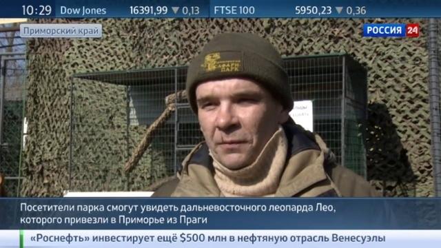 Новости на Россия 24 • Безымянный леопард пополнил парк в Приморье