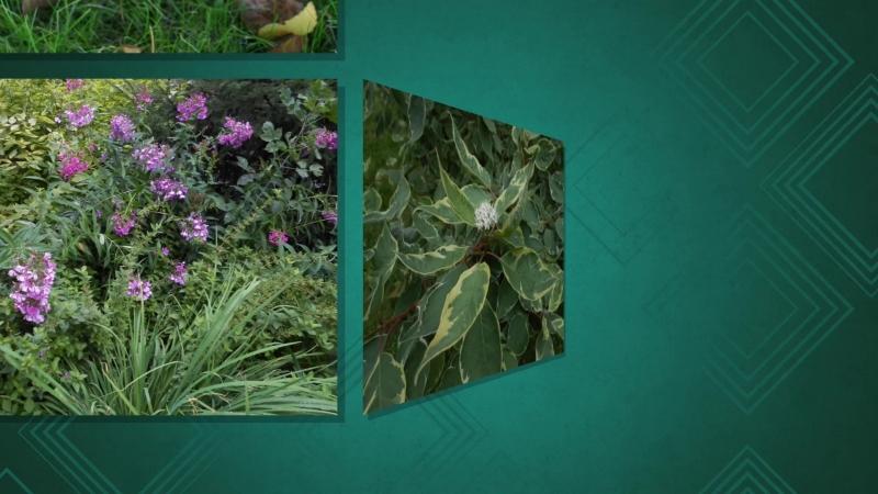 Flowers Slideshow ©VA
