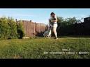 Урок 1 Как познакомить собаку с фрисби
