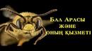 Бал Арасы және Оның Қызметі /Ерлан Ақатаев ᴴᴰ