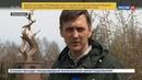 Новости на Россия 24 В Красноярске юноша подарил свое спутнице цветок с памятника воинам Великой Отечественной