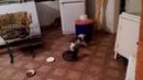 Котята мучители замучили досмерти бедную мышь это жесть