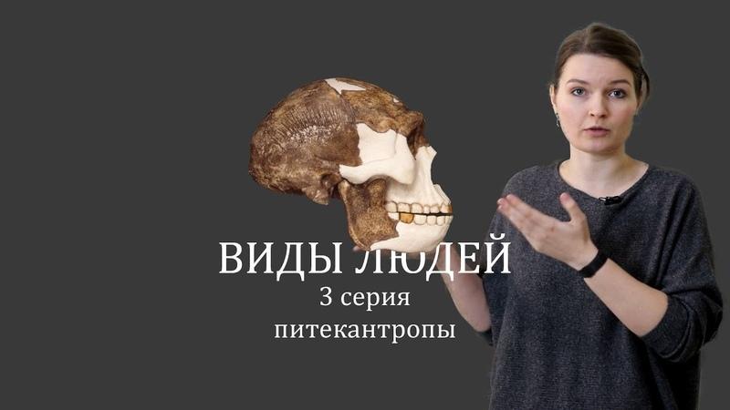 ВИДЫ ЛЮДЕЙ. 3 серия Питекантропы. Елена Сударикова