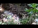 Parque Florestal Municipal Eurico Figueiredo - Conselheiro Lafaiete - MG - Parte 2 [HD]