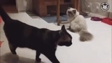 Catality Kung Fu Cat