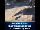 Дворняги атакуют Новочеркасск захвачена остановка Соцгород