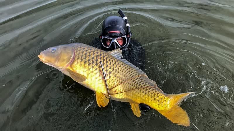 Alexander Kondrashov Сколько Рыбы и Раков в Каспийском Море