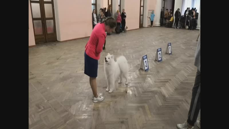 Рокси Best in Group 3 Best of Breed Тула 21 октября 2018 г