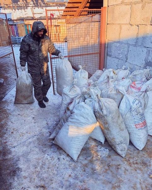 Москвичка и ее муж живут дикарями в сотнях километров от МКАД, чтобы заботиться о более сотни собак
