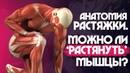 РАСТЯЖКА и СТРЕТЧИНГ. КАК алкоголь влияет на ГИБКОСТЬ Мышцы, сухожилия и связки