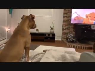Пес смотрит Короля льва