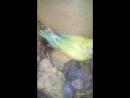 птенцы Кеши и Магелланы