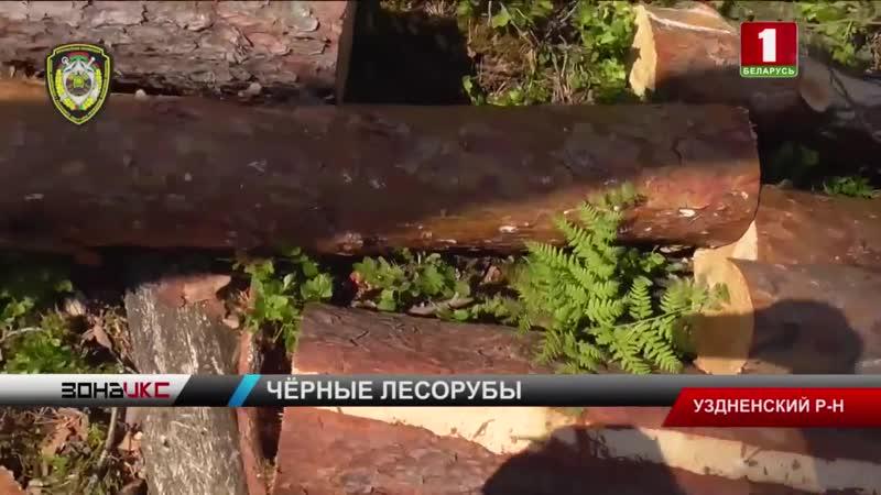 В Узденском районе раскрыли нелегальную схему вырубки леса. Зона Х