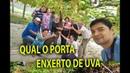 TESTE DE PORTA ENXERTO PARA UVA EM MOGI DAS CRUZES, 02 Plantar em Casa