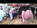 Умный технология Умная сельское хозяйство корова Коза доение курица сбор Яйца свинья теленок плата