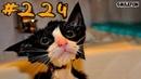 Смешные коты и котики, приколы про котов до слез 2019 – Смешные кошки – Funny Cats