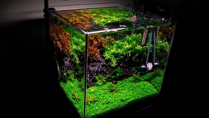 Planted Nano Aquarium - Can you succeed with DIY CO2