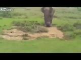 Liveleak com Drunk Man Almost Killed by Elephant Attack