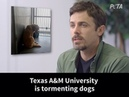 Casey Affleck for PETA calls out @TAMU for its cruel and pointless experiments on dogs