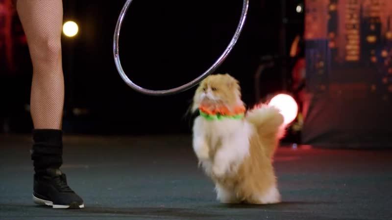 Русские дрессировщицы кошек на Americas Got Talent 2018