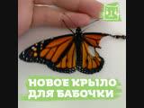 Девушка подарила бабочке новое крыло