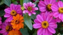 FLOWERS JUST FOR YOU - ERNESTO CORTAZAR - AMOR MIO