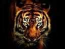 Survivor Eye Of The Tiger Rocky OST