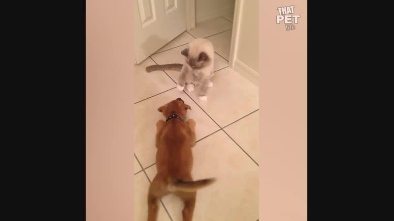 Кошки, которые любят по распускать лапы!