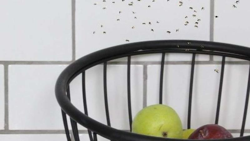 Избавьтесь от фруктовых мушек элементарным способом.